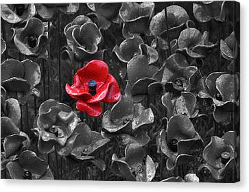 Rememberance Canvas Print - Tower Of London Poppies by Chris Day