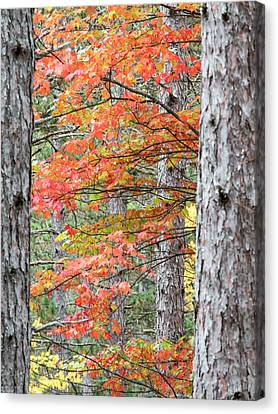 Usa, Michigan, Upper Peninsula Canvas Print