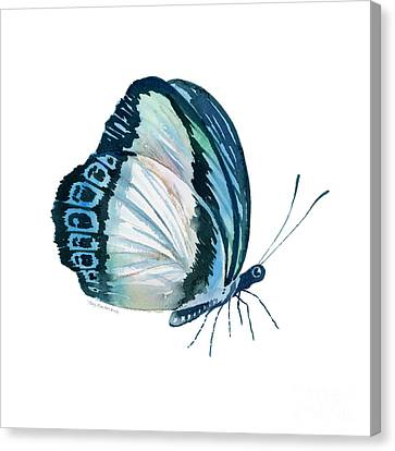 101 Perched Danis Danis Butterfly Canvas Print by Amy Kirkpatrick