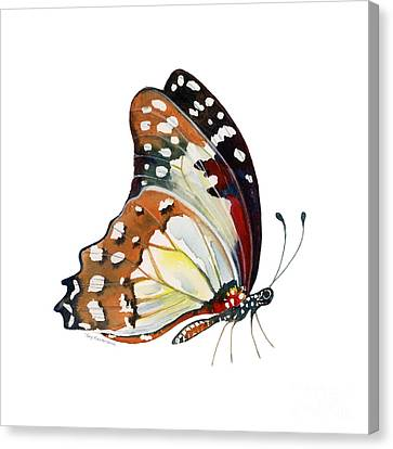 102 Perched White Lady Butterfly Canvas Print by Amy Kirkpatrick