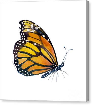 103 Perched Monarch Butterfly Canvas Print by Amy Kirkpatrick