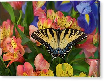 Eastern Tiger Swallowtail Papilio Canvas Print