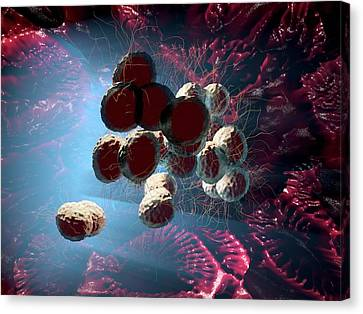 Neisseria Gonorrhoeae Bacteria Canvas Print