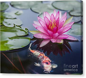 Pink Lotus  Canvas Print by Anek Suwannaphoom