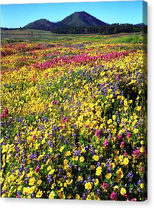 Usa, California, Cuyamaca Rancho State Canvas Print by Jaynes Gallery