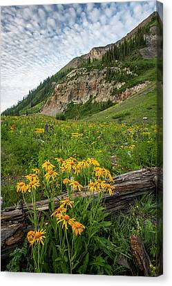 Usa, Colorado, Crested Butte Canvas Print by Jaynes Gallery