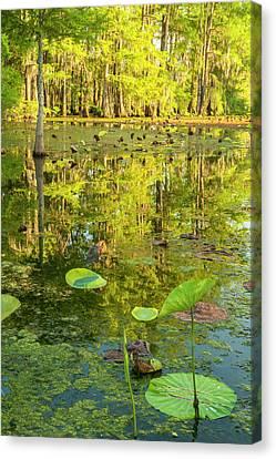 Usa, Louisiana, Lake Martin Canvas Print