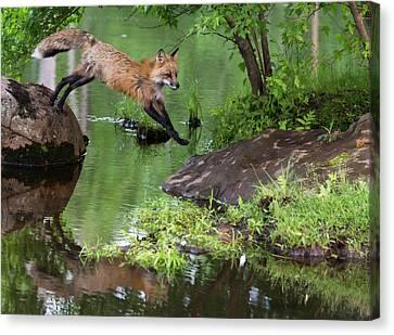 Fox Kit Canvas Print - Usa, Minnesota, Sandstone, Minnesota by Jaynes Gallery