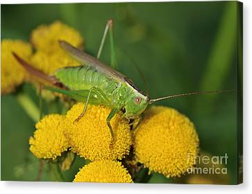 110221p244 Canvas Print by Arterra Picture Library
