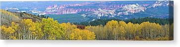 Aspen Trees In A Forest, Boulder Canvas Print