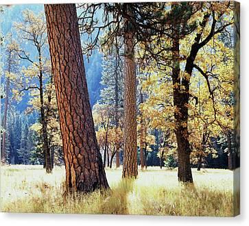 California, Sierra Nevada Mountains Canvas Print by Christopher Talbot Frank