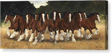 12 Clydesdales Running Canvas Print by Don  Langeneckert