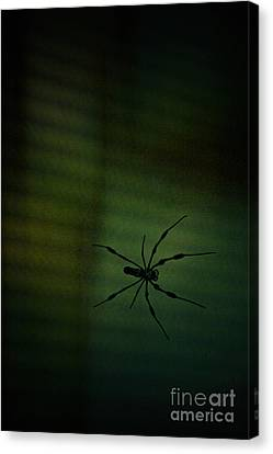 1..2  He's Coming For You Canvas Print