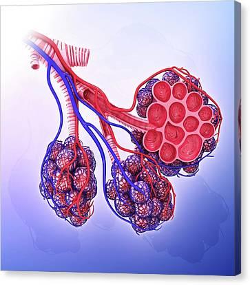 Human Alveoli Canvas Print by Pixologicstudio