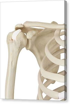 Normal Canvas Print - Human Shoulder Joint by Sciepro