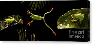 Bromeliad Canvas Print - Red-eyed Tree Frog by Scott Linstead
