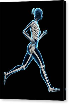 Skeletal System Of A Runner Canvas Print by Sebastian Kaulitzki