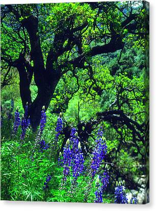 High Park Fire Canvas Print - Usa, California, Sierra Nevada Mountains by Jaynes Gallery