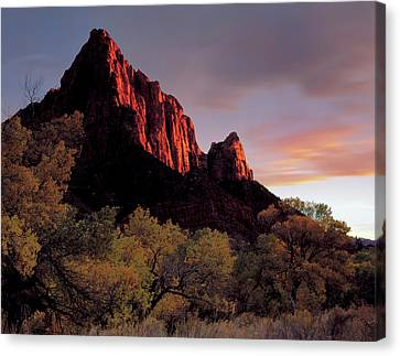 Slickrock Canvas Print - Zion National Park, Utah by Scott T. Smith