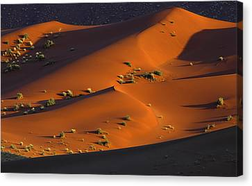 120118p071 Canvas Print by Arterra Picture Library