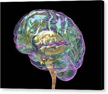 Human Brain Canvas Print by Alfred Pasieka