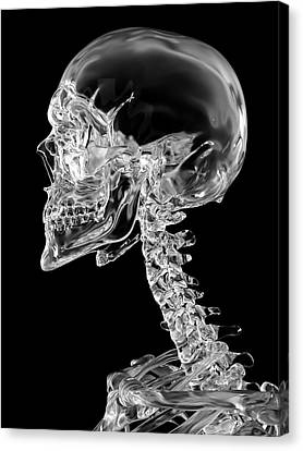 Normal Canvas Print - Human Skull by Sciepro
