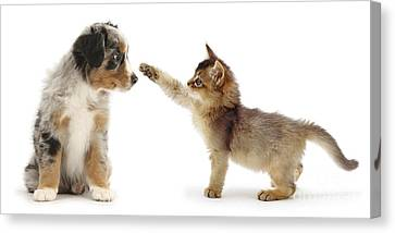 Kitten And Puppy Canvas Print by Mark Taylor