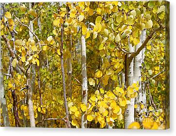 Sierra Autumn Canvas Print by ELITE IMAGE photography By Chad McDermott