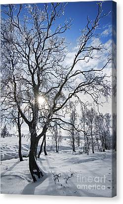 Canvas Print featuring the photograph 130201p341 by Arterra Picture Library