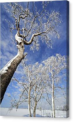 Canvas Print featuring the photograph 130201p343 by Arterra Picture Library