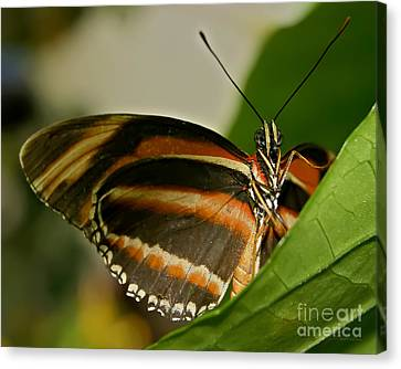 Canvas Print featuring the photograph Butterfly by Olga Hamilton