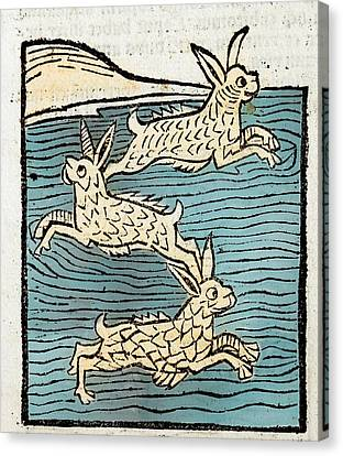 1491 Sea Hares From Hortus Sanitatis Canvas Print