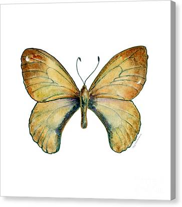 15 Clouded Apollo Butterfly Canvas Print by Amy Kirkpatrick