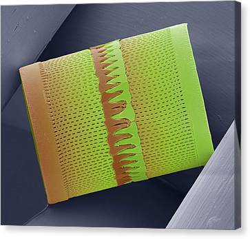 False-colour Canvas Print - Diatom by Steve Gschmeissner