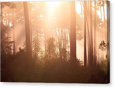 Foggy Sunrise At Long Pine Key Canvas Print by Jonathan Gewirtz