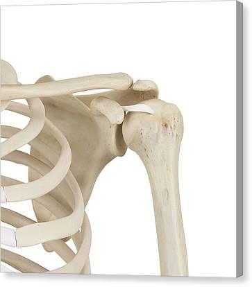 Human Shoulder Bones Canvas Print