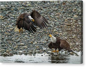 Usa, Alaska, Chilkat Bald Eagle Preserve Canvas Print by Jaynes Gallery