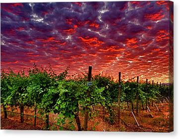 Tasting Canvas Print - Usa, Washington, Walla Walla by Richard Duval