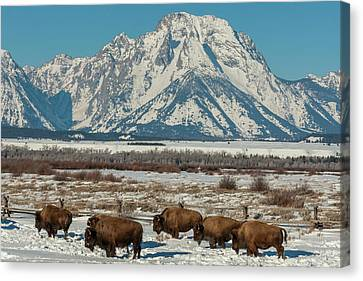 Usa, Wyoming, Grand Teton National Park Canvas Print