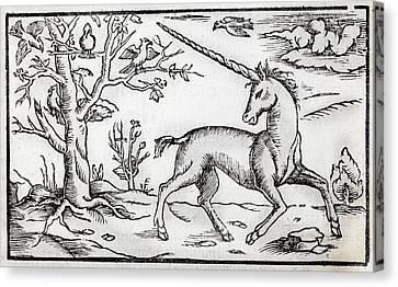 Monoceros Canvas Print - 1560 Munster Unicorn Engraving by Paul D Stewart