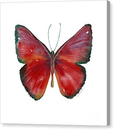 16 Mesene Rubella Butterfly Canvas Print by Amy Kirkpatrick