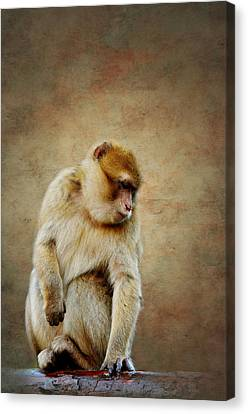 Monkey Canvas Print by Heike Hultsch
