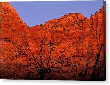 Zion National Park Canvas Print - Usa, Utah, Zion National Park by Jaynes Gallery