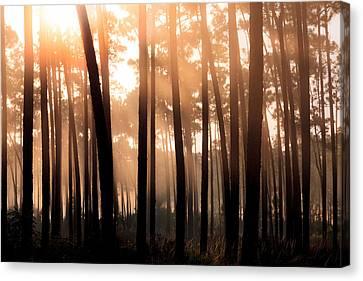 Foggy Sunrise At Long Pine Key Canvas Print by Jonathan Gewirtz