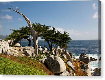 Canvas Print featuring the photograph 17 Mile Drive  by Vinnie Oakes