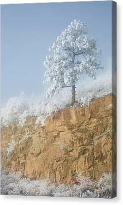 Usa, Colorado, Pike National Forest Canvas Print by Jaynes Gallery