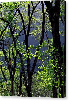 Colorado Plateau Canvas Print - Zion National Park, Utah by Scott T. Smith