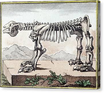 1799 Bru Megatherium Skeleton Early Color Canvas Print by Paul D Stewart