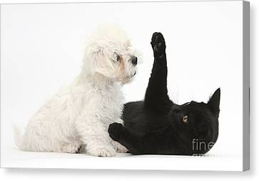 Puppy And Kitten Canvas Print by Mark Taylor