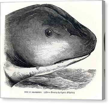 1848 Sea Serpent Monster Hms Daedalus Canvas Print by Paul D Stewart